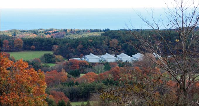 田野畑村のたまご農場