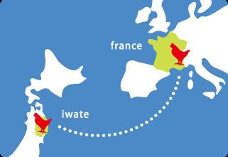 南部どりの祖父母にあたり原種鶏はフランスの赤鶏です。